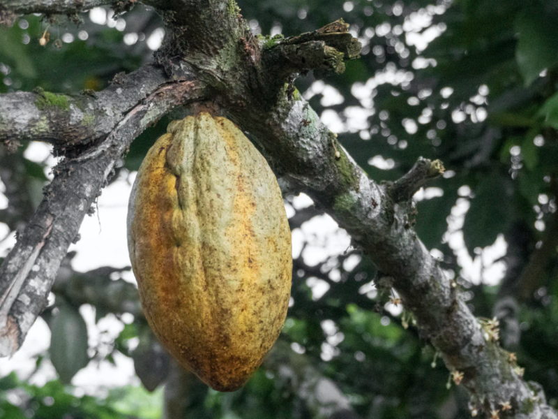 How can the chocolate industry support cocoa farmers?